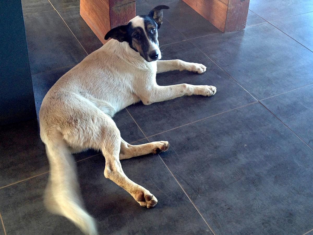 KV Assistance Dogs